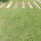 "Cynodon ""Indigenous Lawn"""