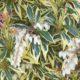Pieris japonica variegata.